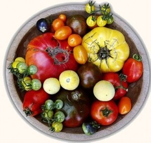 TomatoFEST @ Morgan's Grove Park | Shepherdstown | West Virginia | United States