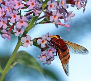 Pollinators @ Home of Priscilla Deem | Martinsburg | West Virginia | United States